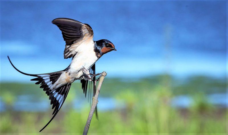 Ornitología Qué Es Definición Qué Estudia Para Qué Sirve Ramas Historia