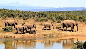 África Qué es, características, economía, cultura, países, fauna, flora, islas
