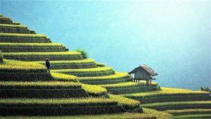 Asia Qué es, características, economía, cultura, países, fauna, flora, islas