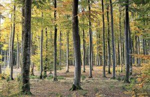 Bosque caducifolio Qué es, características, tipos, fauna, flora, clima, ejemplos