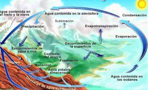 Ciclo biogeoquímico Qué es, características, tipos, ejemplos, importancia