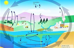 Ciclo del carbono Qué es, características, paso a paso, beneficios