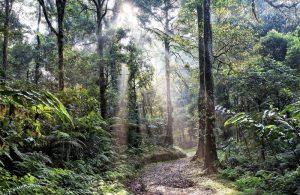 Selva ecuatorial Qué es, características, tipos, fauna, flora, clima, ejemplos