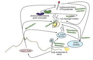 Ciclo del azufre En qué consiste, características, etapas, alteraciones, consecuencias