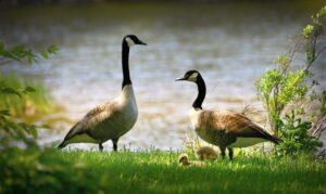 Biodiversidad Qué es, características, tipos, desarrollo, peligro, importancia