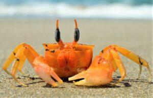 Crustáceos Qué son, características, origen, tipos, hábitat, alimentación