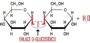 Enlace glucosídico Qué es, características, formación, tipos, propiedades