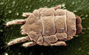 Parasitología Qué es, conceptos, aplicaciones, importancia, ejemplos, libros