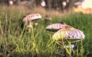 Reino Fungi Qué es, características, origen, clasificación, hábitat, nutrición