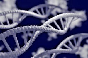 Ácido desoxirribonucleico Qué es, estructura, propiedades, aplicaciones