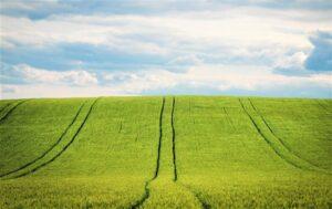 Agricultura | Qué es, características, historia, tipos, ventajas, desventajas