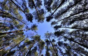 Arboricultura Qué es, características, historia, tipos, ventajas, desventajas