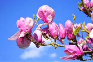 Horticultura Qué es, características, historia, tipos, ventajas, desventajas