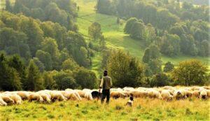 Pastoreo Qué es, características, historia, tipos, ventajas, desventajas