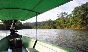Río Amazonas Qué es, características, recorrido, afluentes, nacimiento, fauna