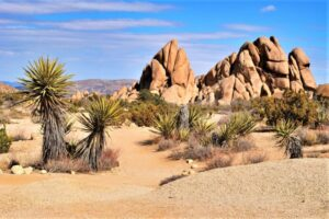 Desierto de Mojave | Qué es, características, historia, ubicación, fauna, flora