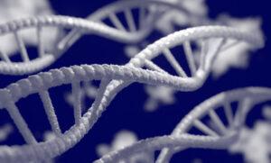 Epigenética | Qué es, para qué sirve, mecanismo, cómo se transmite