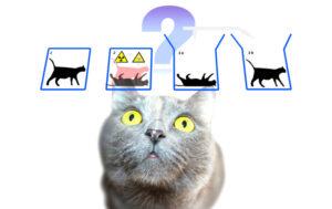 Gato de Schrödinger | Qué es, resumen, origen, explicación, resuelto