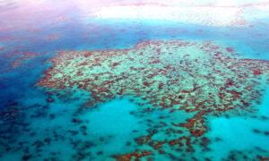 Gran Barrera de Coral | Qué es, características, historia, formación, fauna