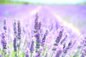 Hierbas aromáticas | Qué son, características, para qué sirven, clasificación