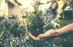 Jardinería | Qué es, características, historia, beneficios, herramientas, riesgos